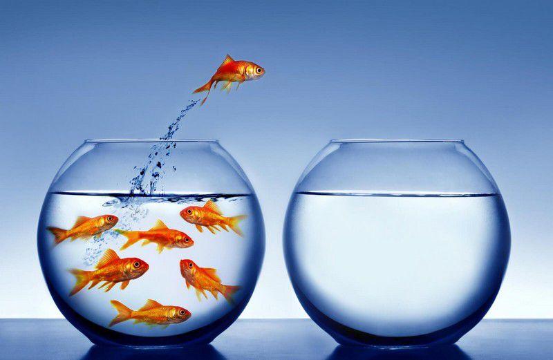 Почему рыбки выпрыгивают из аквариума?