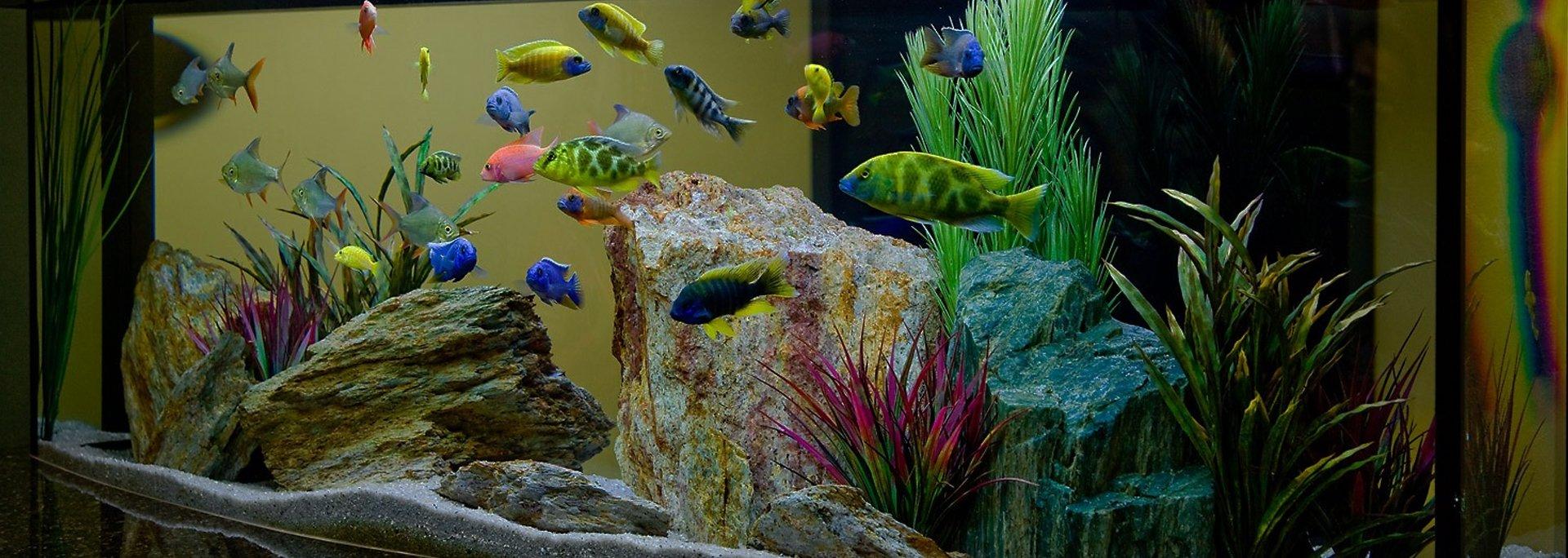Можно ли есть аквариумных рыбок
